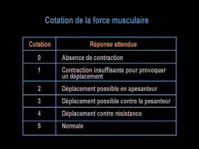 technique d 39 examen de la force musculaire cotation de la force musculaire portail vid o de l. Black Bedroom Furniture Sets. Home Design Ideas